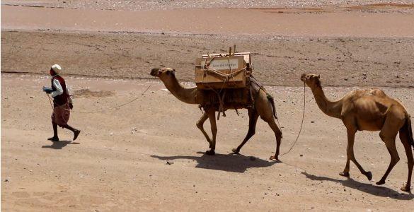kamelen bibliotheek